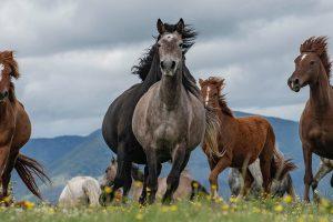 La Calvana, Calenzano, cavalli, Toscana, ambiente.
