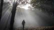 prco nazionale Foreste casentinesi, Franco Berrino, mausolea, alberi, terapia forestale, salute, ambiente, Toscana.