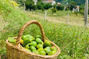 Lunigiana-agriturismo-montagna-Verde