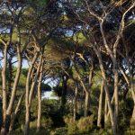 Parco Migliarino San Rossore