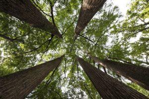 alberi-ciclo-conferenze-Montespertoli
