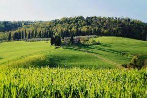 campi di grano-Toscana