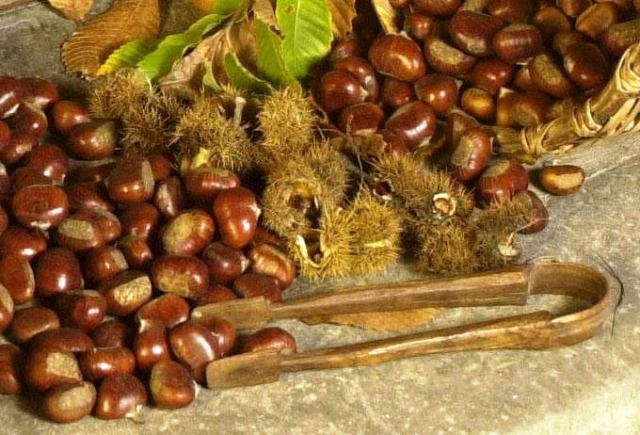 marrone-Mugello-prodotto Igp