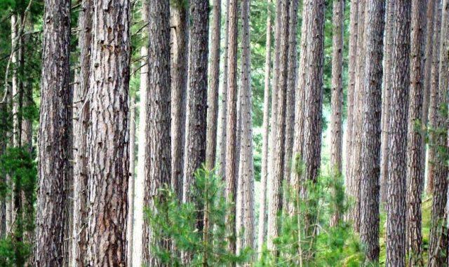 Foreste-tutela-tagli-boschivi