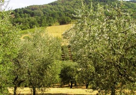 Montalbano-oliveti