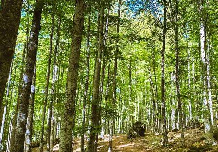 Monte-Amiata-bosco