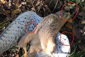 WWF-gheppio-bracconieri