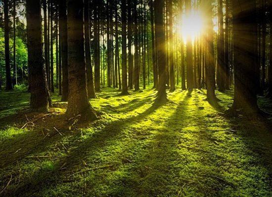 Foreste, boschi, alberi, Università di Firenze- Toscana ambiente.