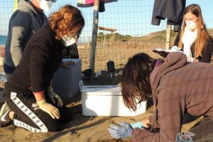 tartAmare-monitoraggio-nidi-tartaruga
