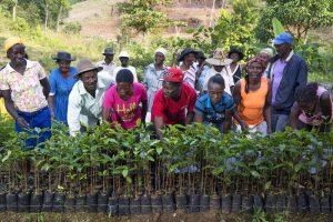 Haiti-piattaforma-Treedom