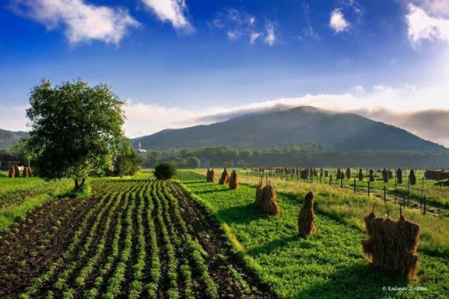 agricoltura-sviluppo-sostenibile