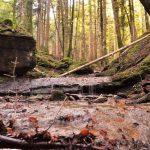 Foreste-Toscana-boschi