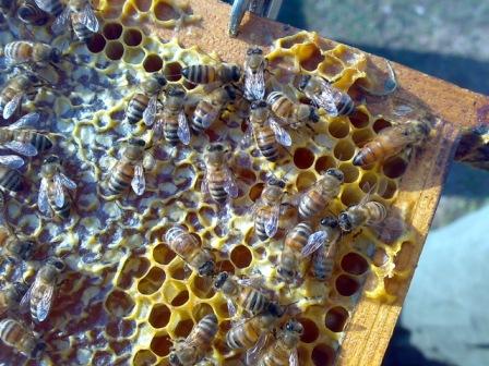 api-Toscana-biologica