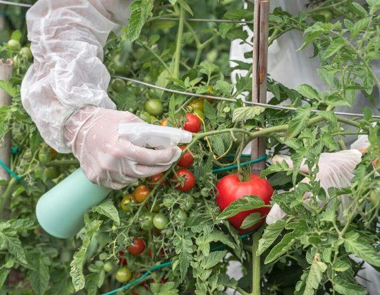 agricoltura-Ogm-decreti