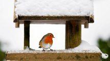 Lipu_uccellino_freddo