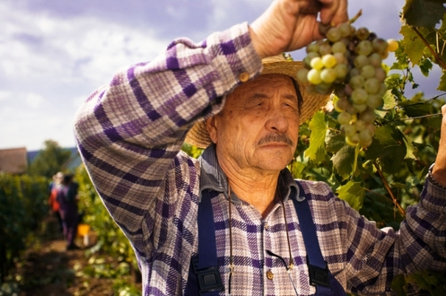 contadino-campagna-viticoltura