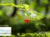 Montespertoli-giardino-nuovi-nati