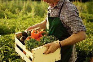 agricoltura-toscana-biologica