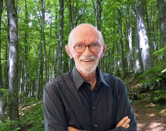 la Grande via di Franco Berrino nel Casentino, Shirin-yoku e forestae, Toscana Ambiente.