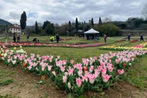 parco tulipani- Firenze
