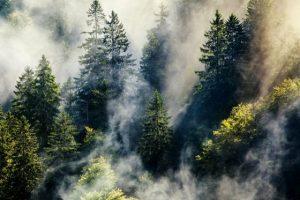 Università di Firenze: il 60% delle foreste europee è a rischio