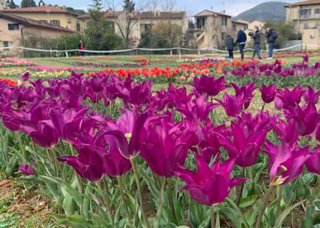 parco tulipani_1