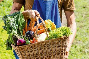 Agricoltura sostenibile e biologica toscana, ecco i bandi da 20 milioni di euro e gli aiuti