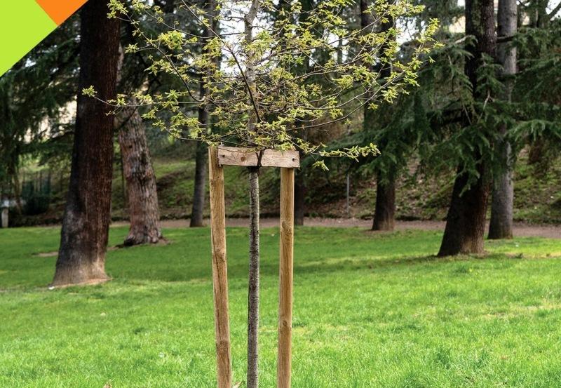 piantumazioni-alberi-Toscana