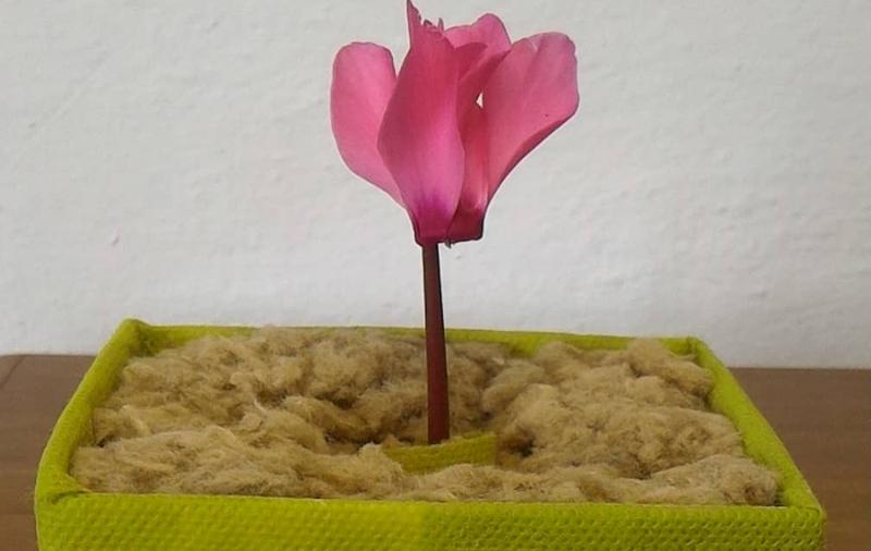 Focus-Capannori-sigarette-piante