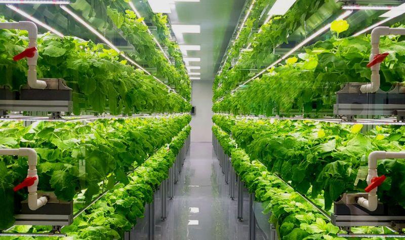 vertical farm-coltura idroponica