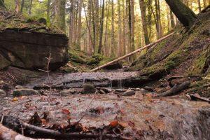 bosco-foresta-Toscana