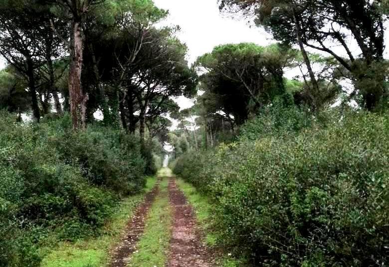 Selva Pisana Natura 2000