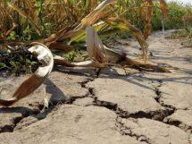 siccità-cambiamento-clima