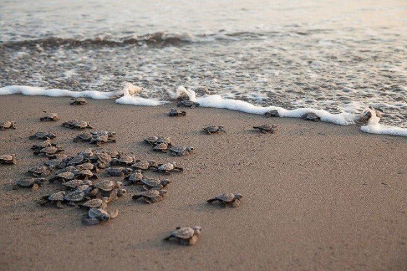tartarughe-appena nate
