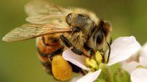 Senza impollinatori meno fiori selvatici, allarme diminuzione dei semi del 20 - 50%.