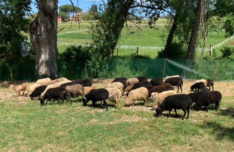 pecore tosaerba giardiniere