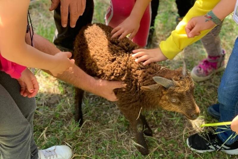 pecore Bagno a Ripoli