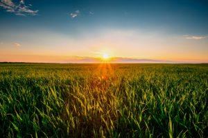 agricoltura_campo-biologico