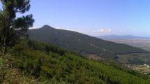 Con la piantumazione di oltre 1350 alberi parte adesso la riforestazione del Monte Pisano