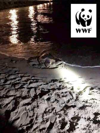 Foto da pagina Facebook Oasi WWF dune Forte dei Marmi