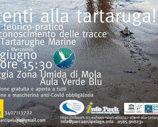 tartarughe tracce-manifesto