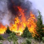 incendio-incendi-boschivi