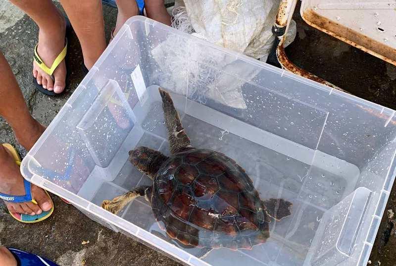 Tartaruga salvata Livorno