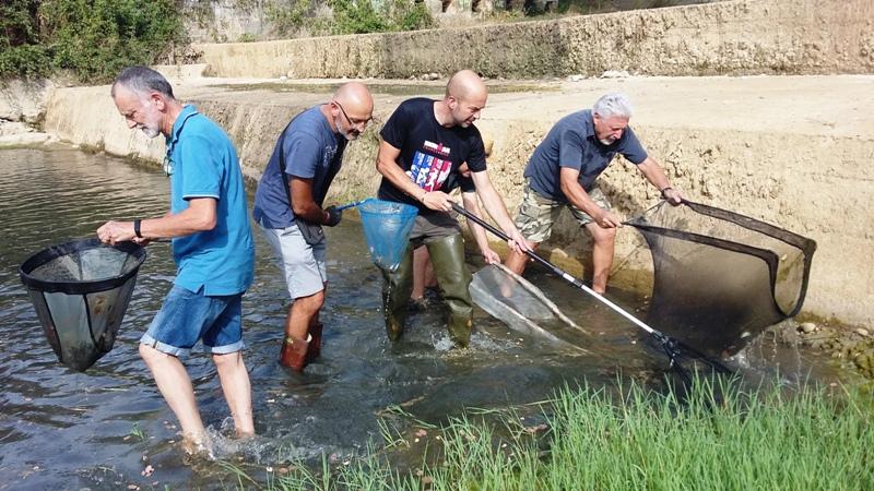salvataggio-pesci-torrente-Pesa