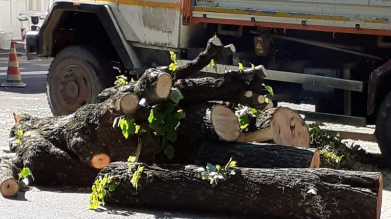 empoli-tagli-alberi