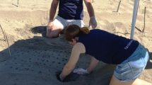 nidi-tartarughe-scavo