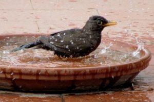 Fontana_uccellino_caldo