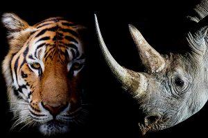 Fotografia, animali e ambiente ancora protagonisti al Siena Awards con Steve Winter e Brent Stirton