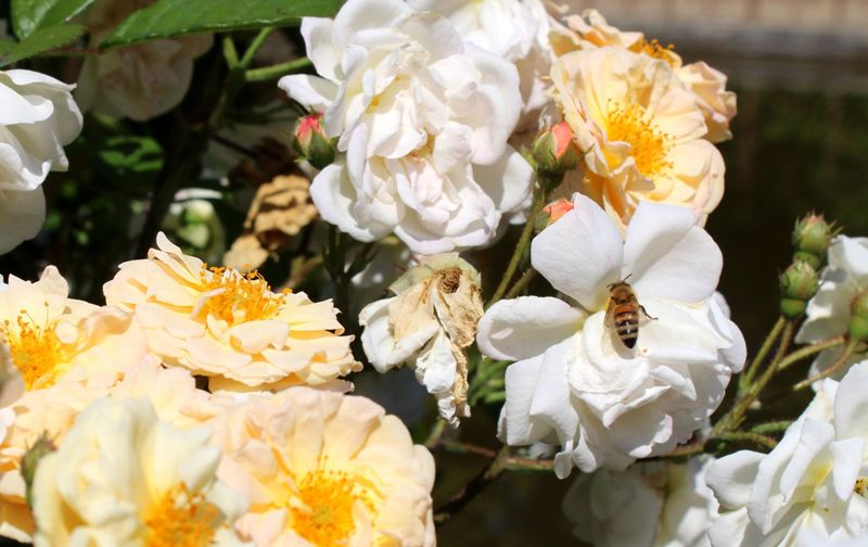 api giardino Boboli