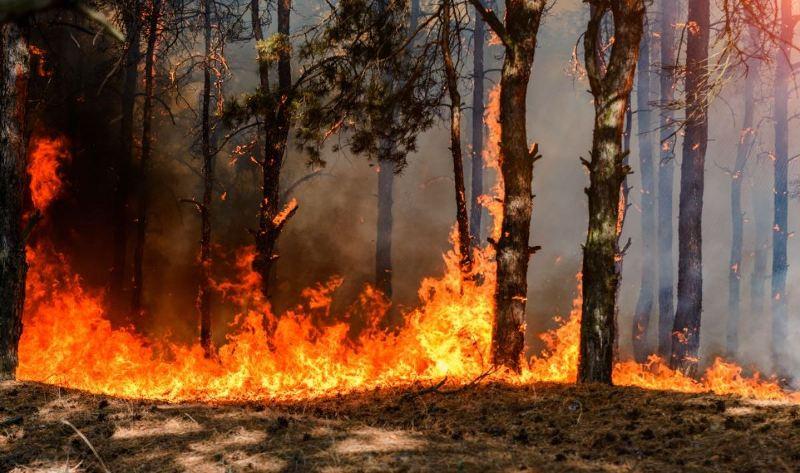 incendi boschivi Toscana